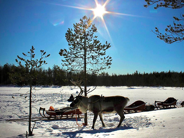 Reindeer Safari To Ice-Fishing Lake