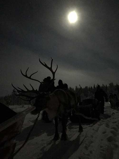 Evening Reindeer Safari - Polar Night