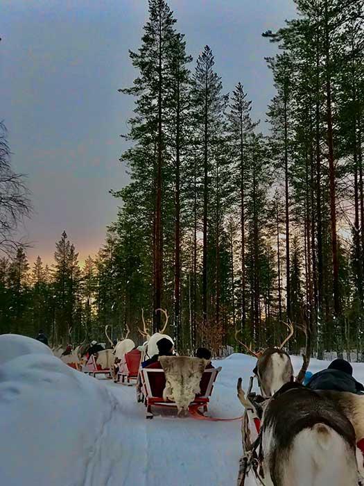 1 hour reindeer safari