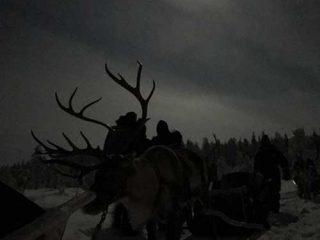 Evening Reindeer Safari - Polar Night