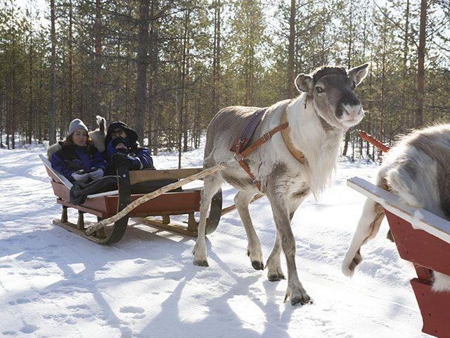 raitola reindeer safaris